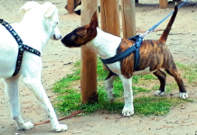 Dog smell dog. One of the most developed senses in one species in nature: smell sense in dogs