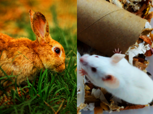 Other animals with very highly developed smell sense: Mice and rabbits. The group of animals with great sense smell are called macrosmatics (we humans are definitely not macrosmatic, but on the contrary microsmatics (a group of animals we share with cows).