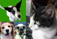 Animal Hackers welcome