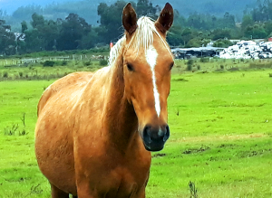 Horses (as other herbivores) have to be very aware of their surroundings if they want to survive