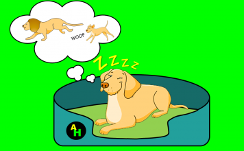 Dog beds guide Feature image
