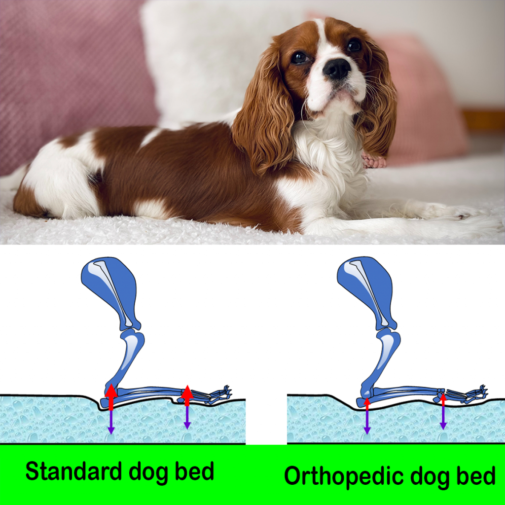 Orthopedic beds are easy on joints. This image shows the forces that affect the elbow joint in an orthopedic dog bed vs a regular bed
