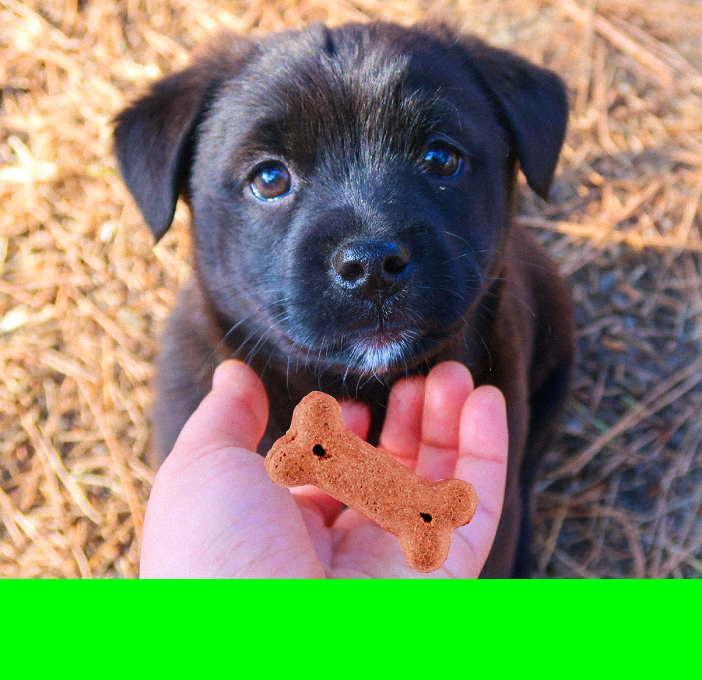 Healthy dog treats are not only for grown-up dogs. Puppies are allowed to have treats but only as a supplement to a regular balanced diet