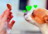 Dogs love treats