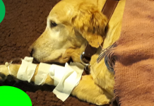 Dogs wounds can happen and we should be prapared to deal with them