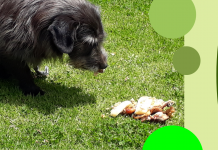 Raw food is the natural food for dogs