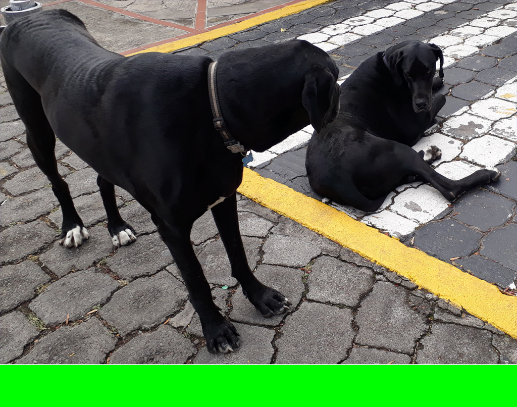 Dog treats for a large breed (great Dane), an example