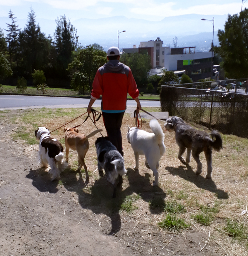 Having your dog exercised by a dog walker has the advantage of your dog being in the the company of other dog pals