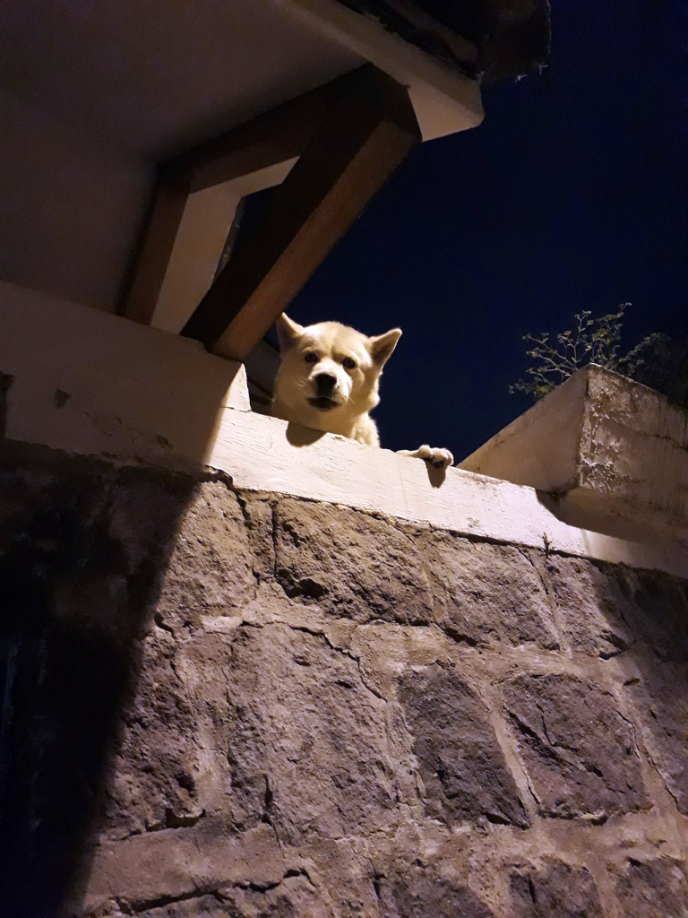 Dogs love to be guardians whenever given the chance. They will zealously protect our homes day and night
