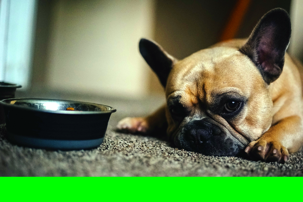 Dogs choose certain places over others to do their doggy things, like eating (dogs will not enjoy their food if we place their food bowl in the wrong place)