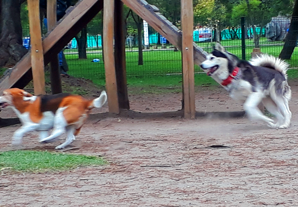 Dogs of certain breeds are very active and require enough exercising time daily